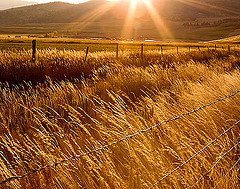 amber-waves-wheat-fields.jpg