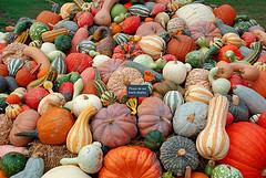 gourds-pumpkins-thanksgiving.jpg