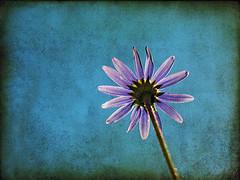 simple-flower.jpg