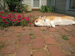 dog-brick-patio